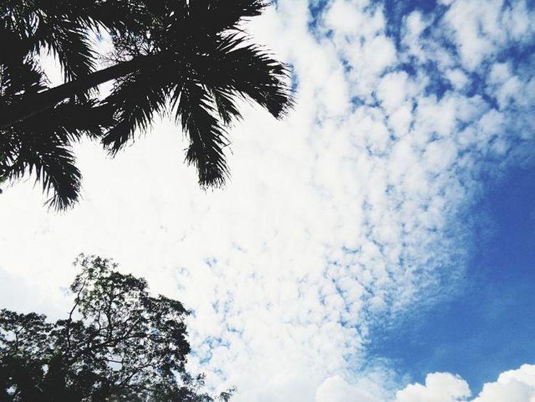 Sky Trees Clouds VSCO Vscofilter Vscot2 Vscosky Vscogood Vscogreat Vscoperfect Vscoalltheway Vscocool Vscophilippines Sonydscw830 Vscocam Vscocamph VscoCamPHF Vscophilippines ☁🌳