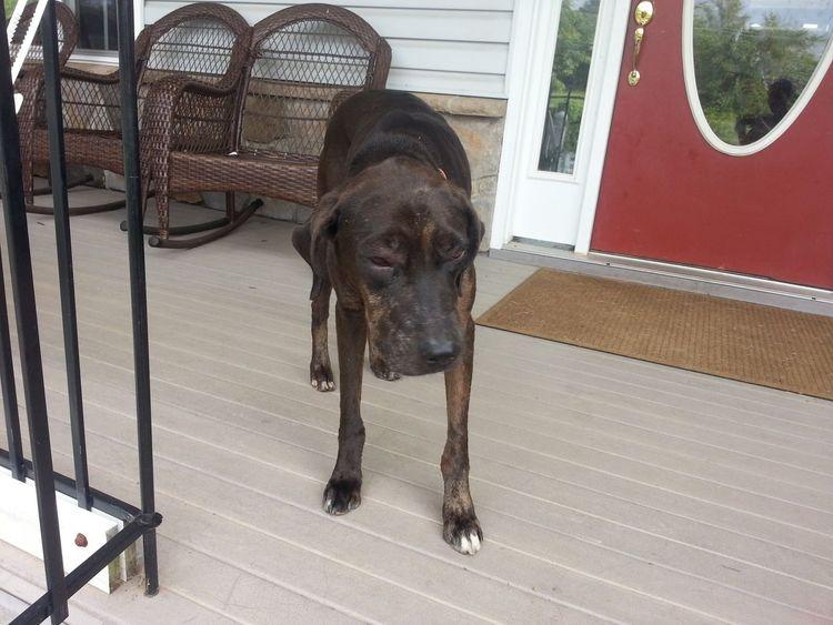 One Animal Animal Themes Domestic Animals Outdoors dog Dog Life Dog Lover