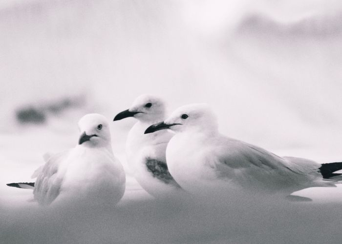 Three Seagulls Waterfront Waves Birds Three Bird Animal Themes Group Of Animals Animal Vertebrate Animals In The Wild Animal Wildlife Nature No People Close-up White Color Outdoors