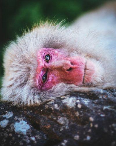 Monkey Stare Monkey Animal Themes Animal One Animal Close-up Animal Wildlife Animals In The Wild Vertebrate