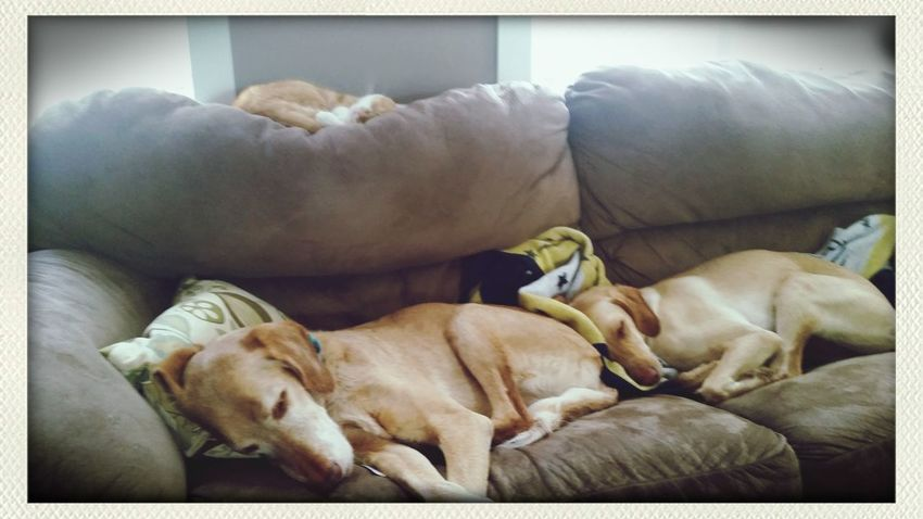 My Pets Napping I Love My Dog Lazy Afternoon