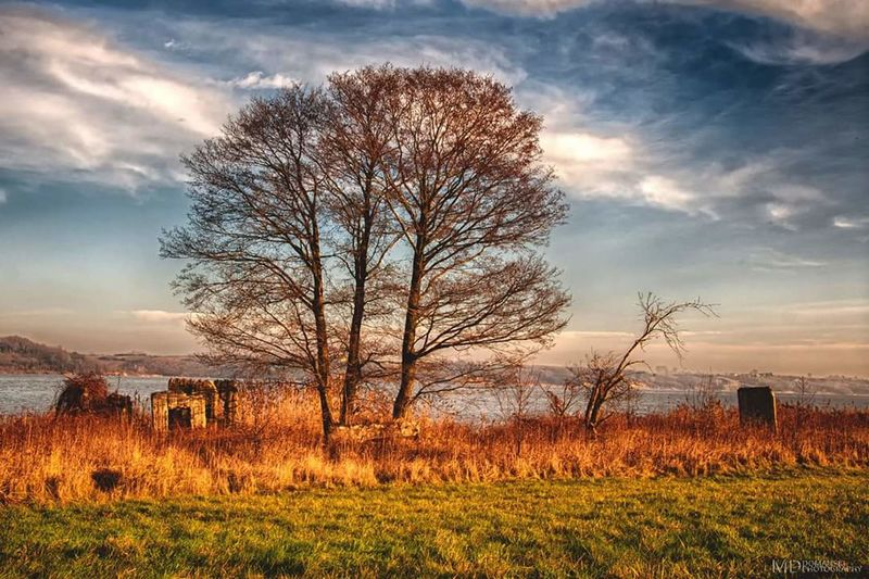 """""""Nad Wisłą """" Field Nature Beauty In Nature Plant Sunset Meadow Growth Cloud - Sky Landscape Scenics Dawn Outdoors Rural Scene Gold Colored Tree Sky Day Flower No People Freshness"""