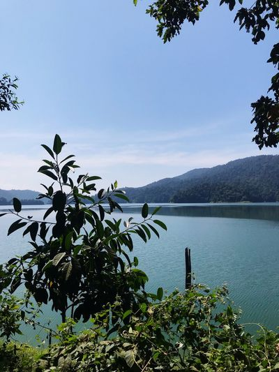 Good day Water Sky Plant Scenics - Nature Nature Tree Tranquility Beauty In Nature Growth Day Mountain Tranquil Scene Lake Leaf No People Non-urban Scene Outdoors Idyllic