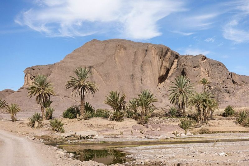 Desert Sand Landscape Travel Destinations Rock - Object Arid Climate Nature Sand Dune Geology Scenics Cloud - Sky Sunny Day Beauty In Nature Palm Tree Outdoors Plant Tree Travel Sky Oasis Morocco Ouarzazate Explore Exploring