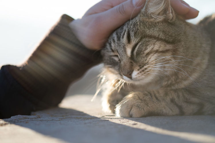 Cropped Image Of Owner Stroking Cat