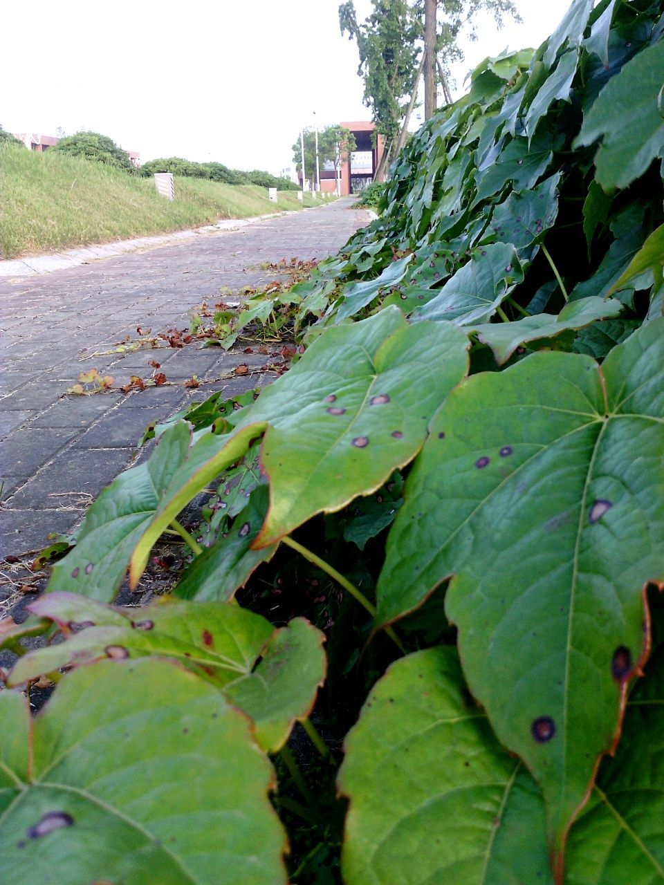 leaf, growth, plant, green color, nature, outdoors, road, day, no people, close-up, freshness