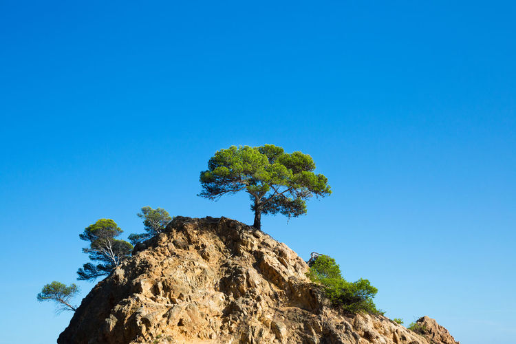 Sky Blue Tree Copy Space Rock Low Angle View Rock - Object Clear Sky Plant Solid Beauty In Nature Nature Day Rock Formation No People Tranquility Scenics - Nature Tranquil Scene Outdoors Growth Mountain Peak Tree Sunlight Dry