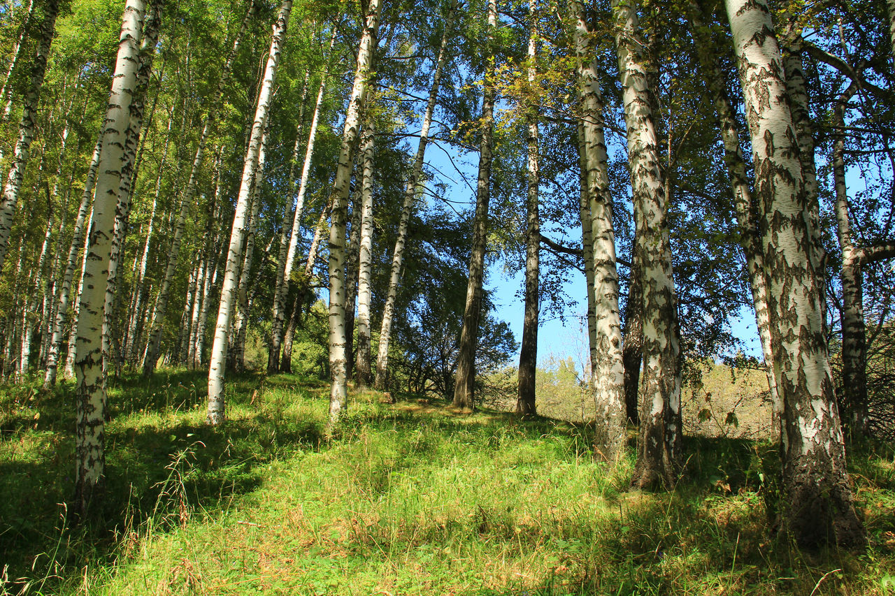 VIEW OF TREES GROWING IN FOREST