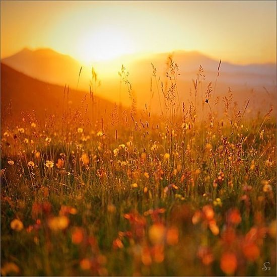 Today pictures is morning sunsets with flowering. Follow me. Photoshots