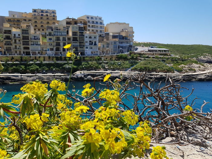 Xlendi, Gozo Tourist Resort Tourquise Sea Malta Mediterranean  Medeteranian Sea Holiday Gozo Island Malta Xlendi Bay Tree City Flower Water Blue Sky Architecture Building Exterior Built Structure Plant