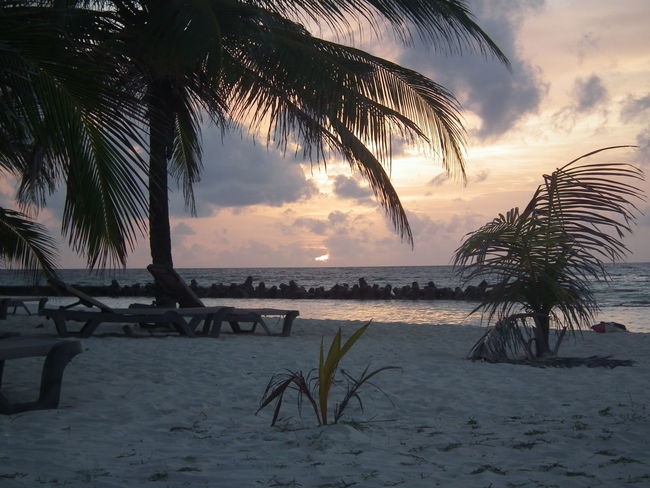 Kuredu Maldives Relaxing Carl Siddall Chilled Out Palm Trees Paradise Sunset