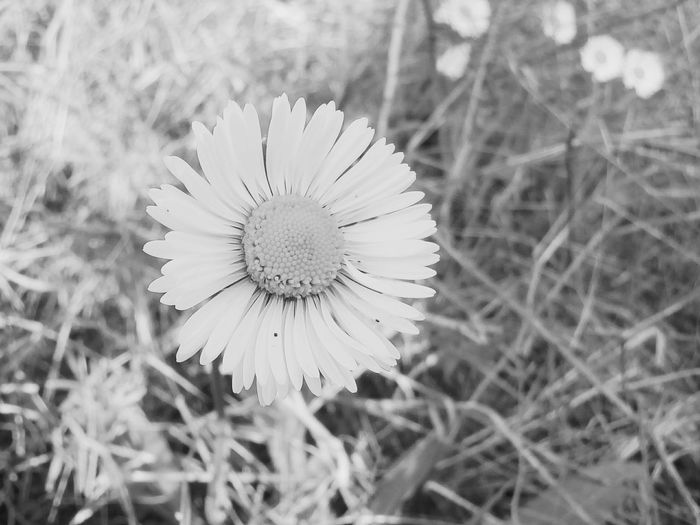 Fleur Nature Fragility Beauty In Nature