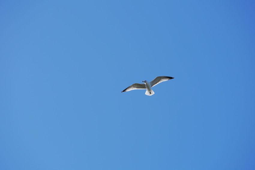 Panasonic DMC-G3   F/7,1   1/640 sek   ISO-160   78 mm Bird Flying EyeEmNewHere Live For The Story