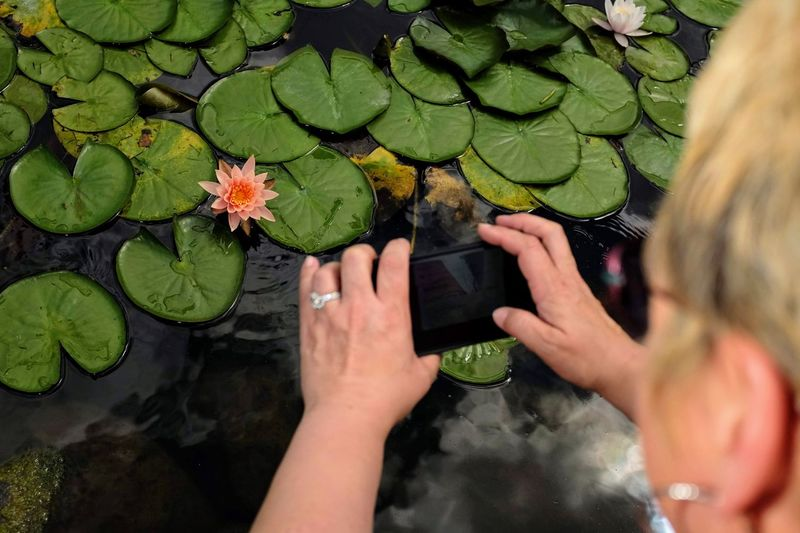 High angle view of woman photographing lotus water lily