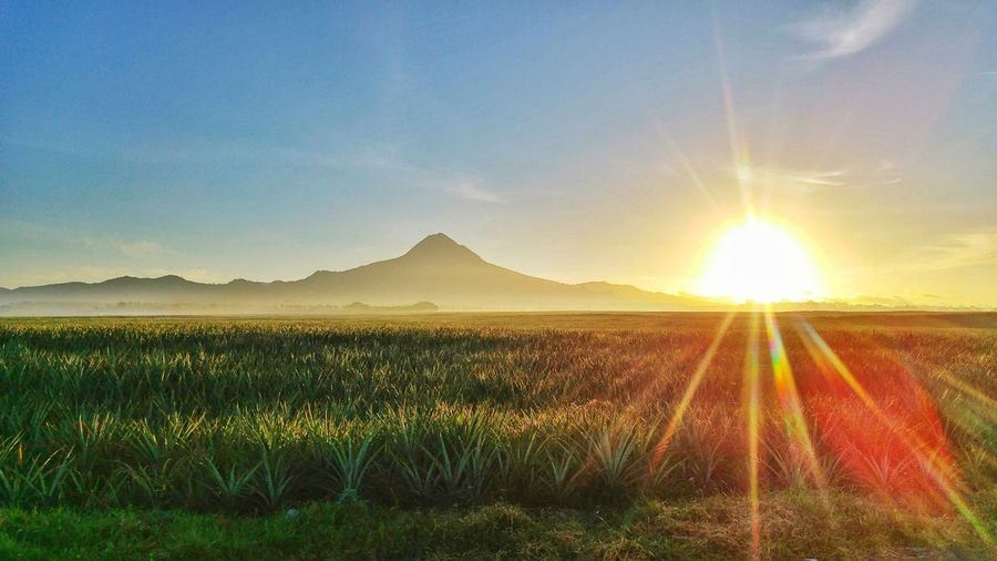 Scenic view of agricultural field against bright sun
