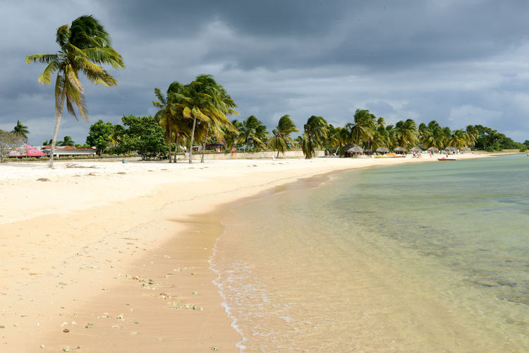 Bay Of Pigs Cuba Beach Beauty In Nature Cloud - Sky Day Girón Horizon Over Water Incidental People Nature Outdoors Palm Tree People Sand Scenics Sea Shore Sky Tranquil Scene Tranquility Travel Destinations Tree Tropical Climate Vacations Water
