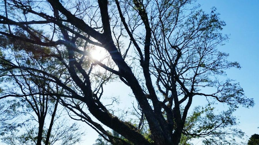 Sao Paulo - Brazil Tree And Sky Blue Sky Blusky Naturephotography EyeEm Nature Lover Photography