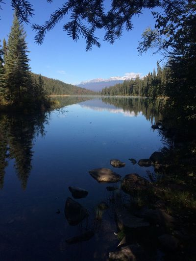 Jasper Canada Valley Of The Five Lakes Water Reflection Lake Tranquility Tree Plant Tranquil Scene