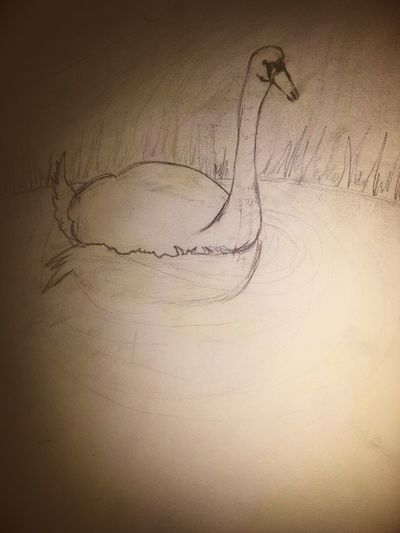 Taking Photos Check This Out My Drawings AllCreaturesGreatAndSmall
