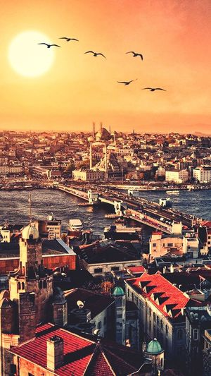 """İstanbul """"Golden City"""" #CrowdedPlace #Creativity  #nice #Nature  #photography #beautiful #bigcity #City Building Exterior Flying Architecture Bird Sky Animal Themes Built Structure Nature City Sunset Cityscape Mid-air No People Animal Wildlife Vertebrate Animals In The Wild Animal Group Of Animals Large Group Of Animals Building First Eyeem Photo"""