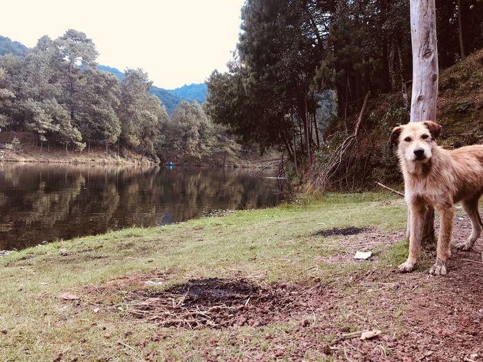 El perro de la presa Mammal Animal Themes Domestic First Eyeem Photo