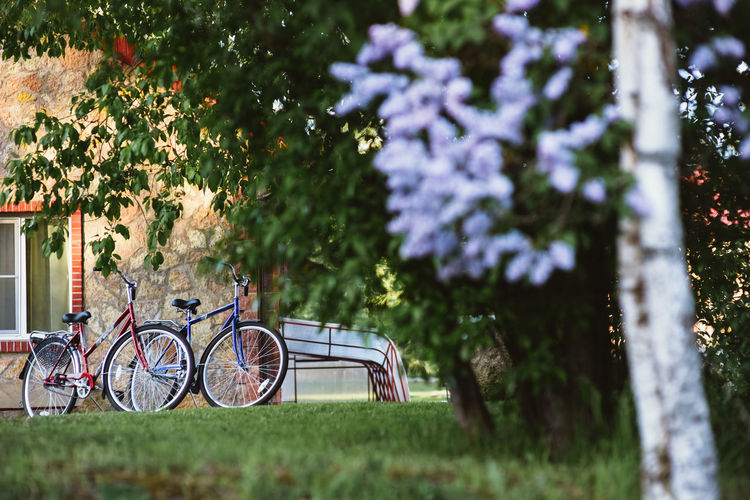 Two bicycles Holiday Bicycle Bicycling Bike Bikes Cycling Flower Green Color Land Vehicle Mode Of Transportation No People Outdoors Park Parking Stationary Transportation