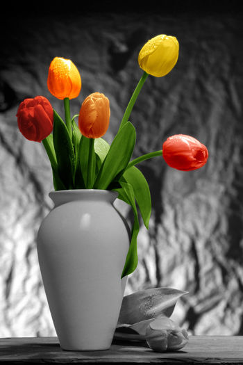 Beauty In Nature Close-up Day Fine Art Photography Flower Flower Head Fragility Freshness Indoors  Leaf Manual Colored Nature No People Petal Plant Tulip Vase