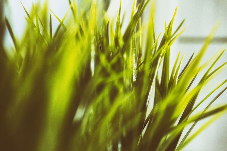 Plastic decoration - Artificial Flower Plastic Decoration Close-up Day Decoration depth of field Dof Freshness Grass Green Color Growth Indoors  Nature No People Outdoors Plant Plastic Plastic Flower Plastic Grass Selective Focus