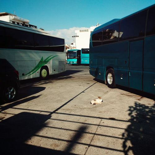 charging station Mobile Photography Project Cats Of EyeEm Stray Cat Sunbathing Cat Snapseed Mobile Photography Bus Station Catlovers Buses Shadow Sunlight Sky Parking Mode Of Transport Parking Lot