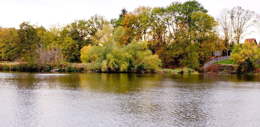 Herbst auf dem Land River Mulde River Wurzen Fall Tree Plant Water Nature Lake Growth Sky Day Beauty In Nature Tranquility Scenics - Nature Waterfront Reflection Outdoors Tranquil Scene No People Idyllic Green Color