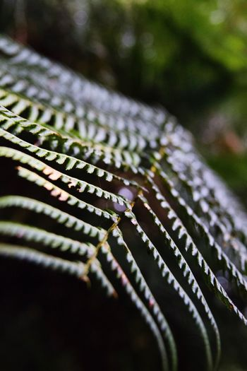 Detail of the rainforest Close-up Selective Focus No People Nature Day Outdoors Film Industry Plant Flora EyeEm Nature Lover Great Ocean Road, Australia Maits Rest Rainforest Walk Rainforest Australia Green Macro