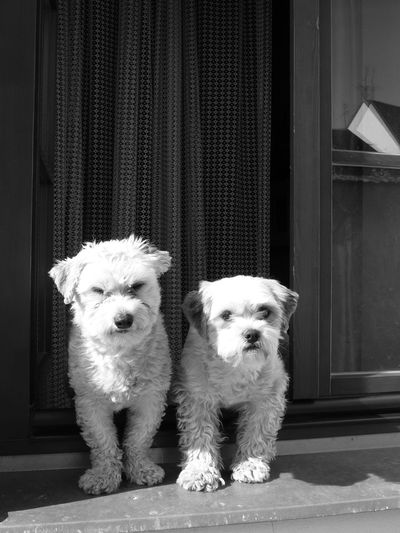 Black and white portrait of dogs