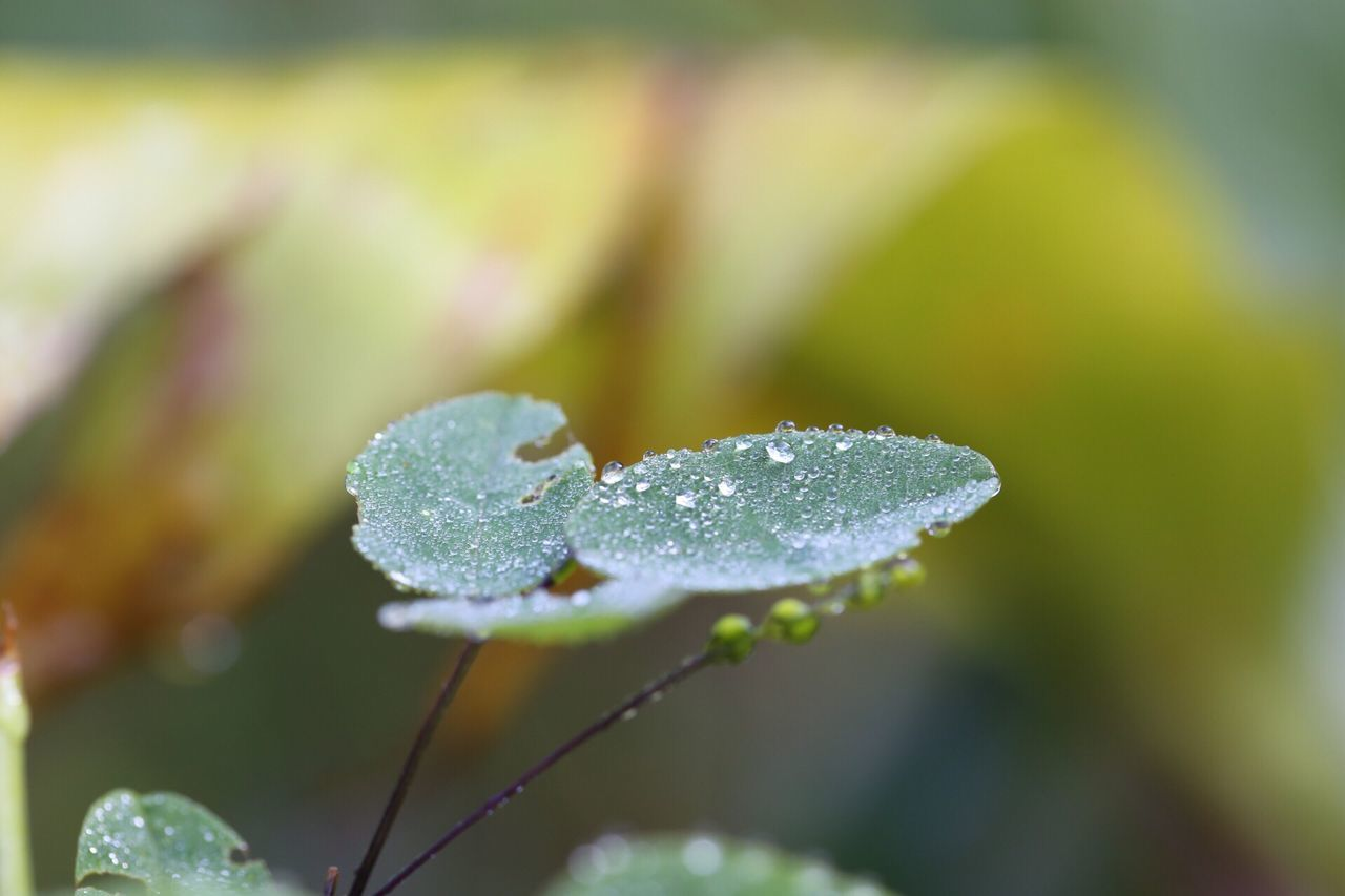 drop, nature, water, close-up, freshness, focus on foreground, leaf, growth, beauty in nature, fragility, green color, day, no people, plant, outdoors