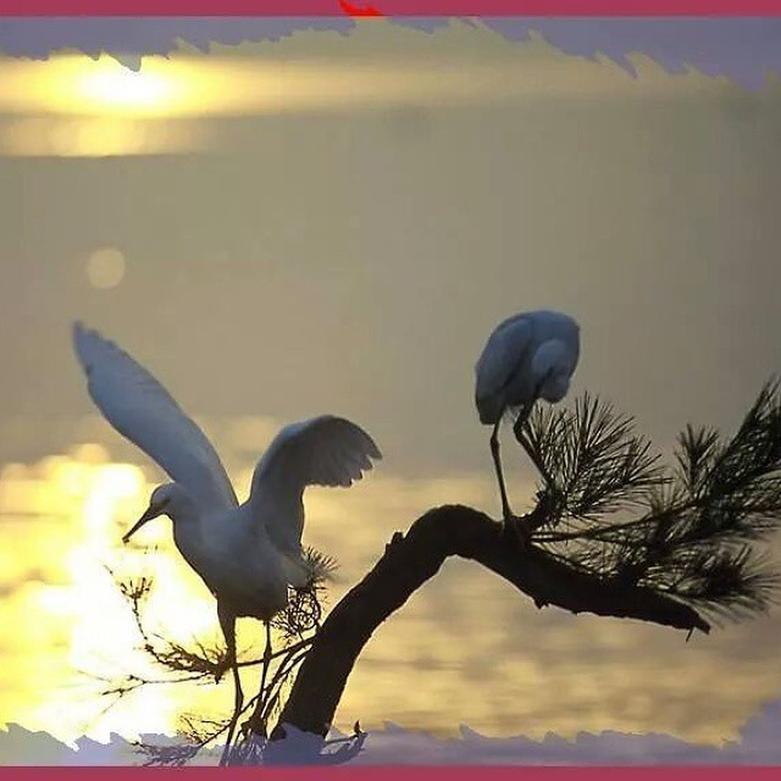 bird, animals in the wild, animal themes, wildlife, flying, sunset, perching, nature, sky, one animal, spread wings, water, silhouette, seagull, beauty in nature, two animals, outdoors, no people, sunlight, mid-air