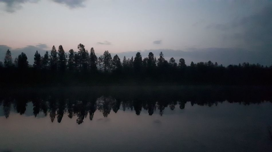 Tree Forest Fog Dawn Pine Tree Lake Pinaceae Reflection Sky Landscape