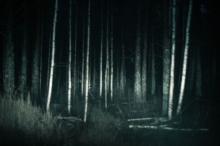Trees in forest at night