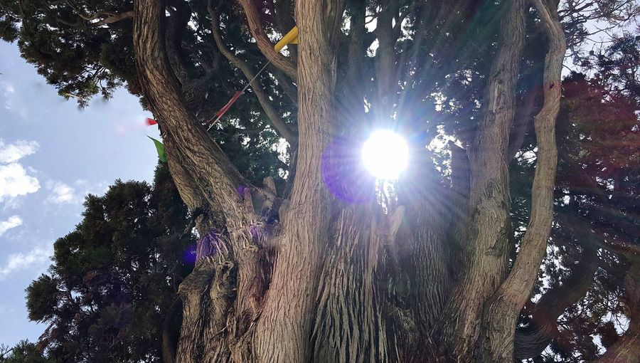Tthe Sun Illuminating The Tree Branches The Sun And Beauty Eyeem Photography The EyeEm Collection Enjoying The Natural The Great Outdoors - 2016 EyeEm Awards Photography And Poetry Hello World