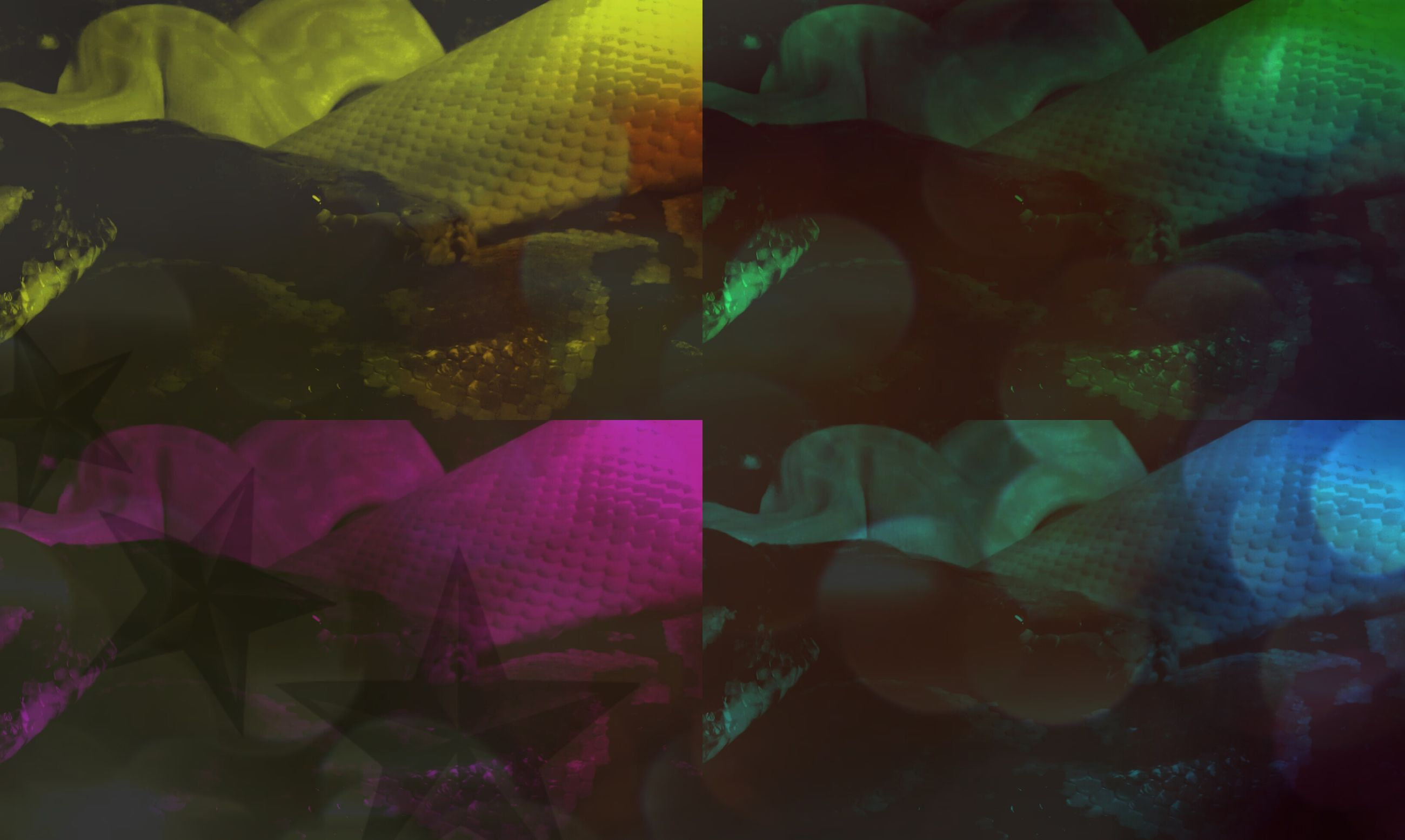 indoors, underwater, high angle view, close-up, fish, sunlight, no people, nature, day, textile, fabric, variation, multi colored, green color, abundance, sea life, water, plastic, relaxation