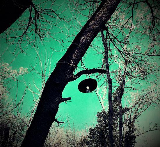 Lampada Lampione Bosco Lamp Wood Creepy Horror Nature Nopeople Natura Paura