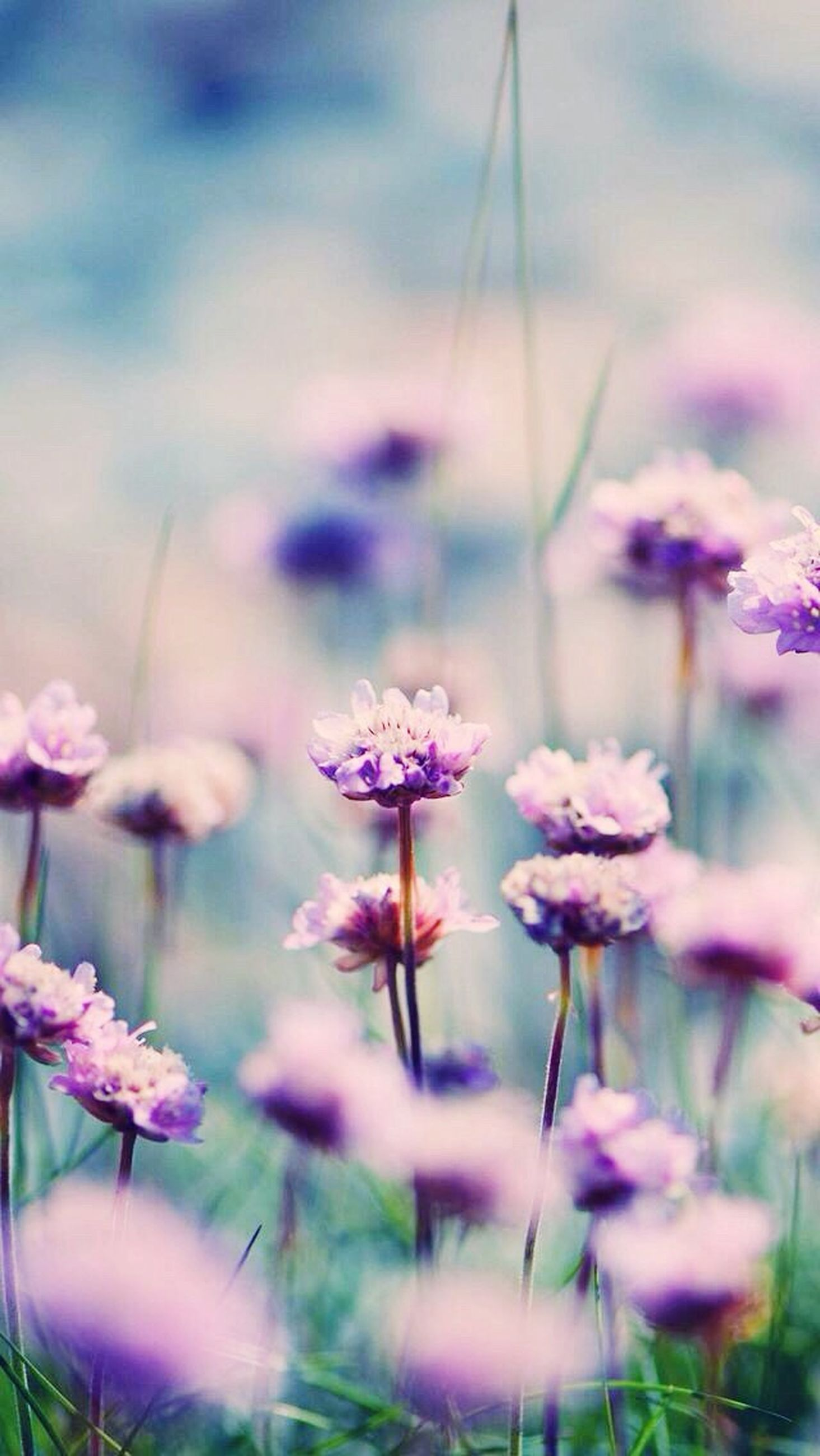flower, freshness, growth, fragility, focus on foreground, stem, plant, beauty in nature, nature, close-up, field, selective focus, purple, blooming, wildflower, flower head, pink color, petal, blossom, in bloom