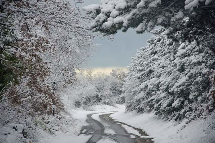 Snow Winter Cold Temperature Pinaceae Landscape Pine Tree Mountain Forest Fog Rural Scene Snowing Tree Area Nature No People Beauty In Nature Outdoors Tree Road Mountain Range Sky