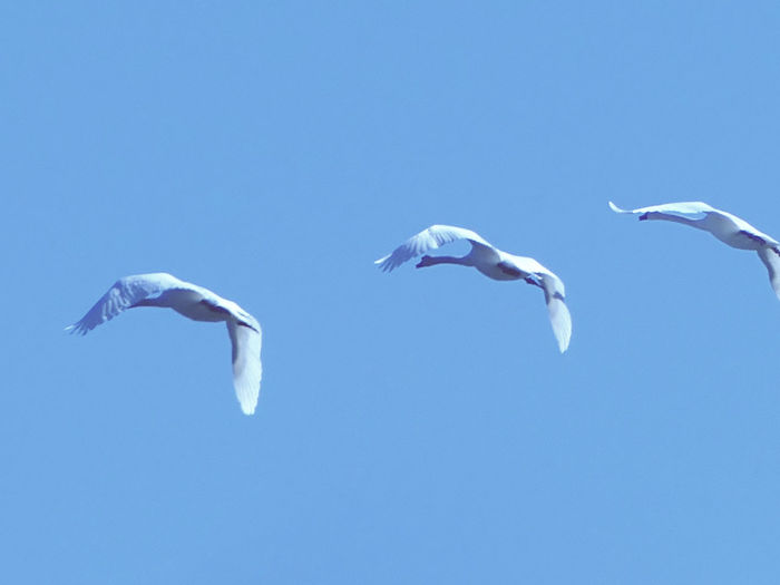 Low angle view of seagulls flying in sky