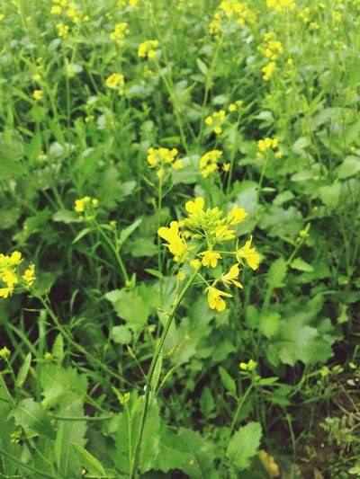 Yellow Flower Plant Nature Growth Fragility Beauty In Nature Freshness Petal No People Blossom Close-up Springtime Blooming Day Flower Head Outdoors