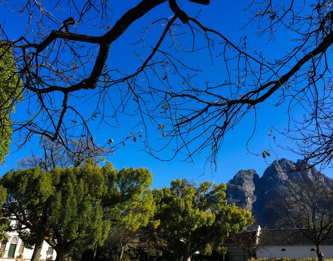 Summers day at the Boschendal Wine Farm in Franschhoek. Tree Nature Low Angle View Outdoors Scenics Sky Wine Tasting Franschhoek Boschendal