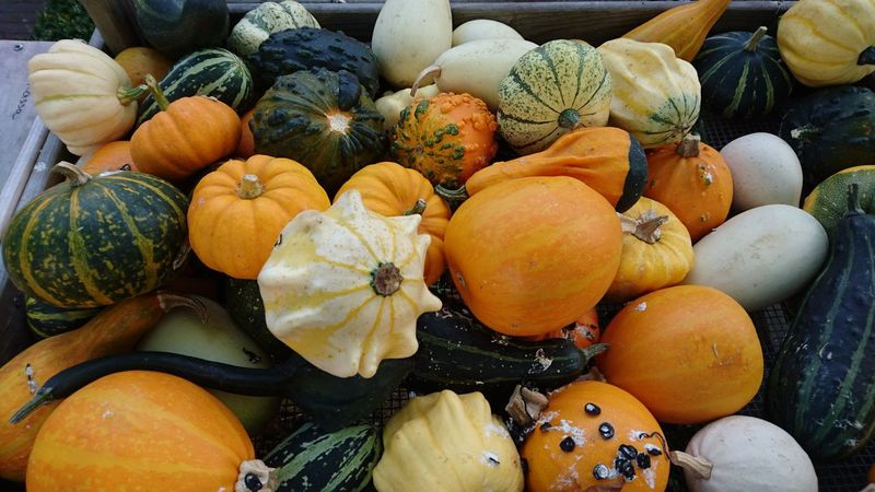 Squash for sale Garden Flora Food Vegetable Pumpkin Entrepreneurship Bollenstreek