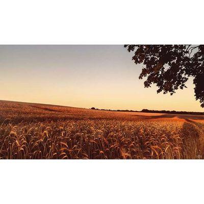 A field in the summer. Michaellangerfotografie Summer Sunset Fotografie Photography Photographyislife Germany Brandenburg CripixtMovement Earthshoot
