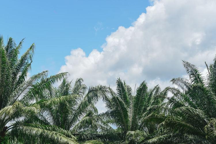 Sky Plant Cloud