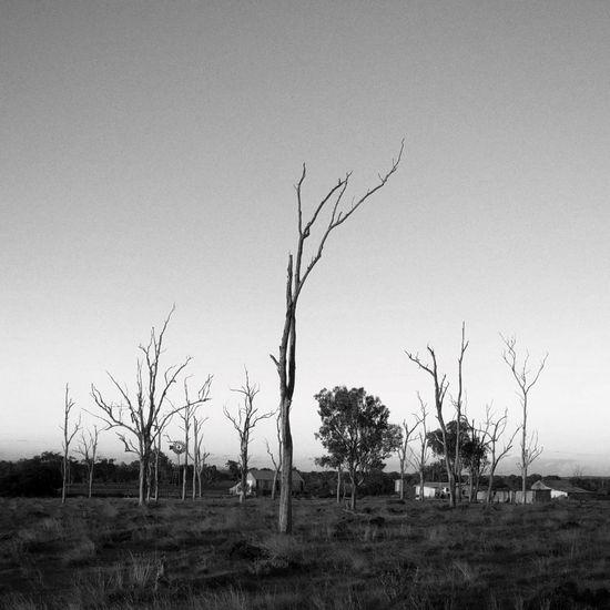 Sky Plant Tree Environment Landscape Land Field The Great Outdoors - 2018 EyeEm Awards
