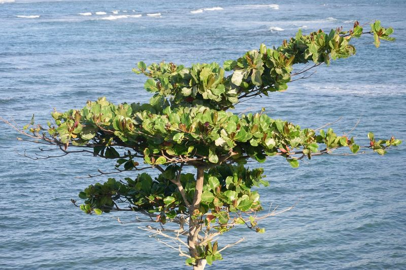 Small tree growing by sea Plant Water Nature Tree Sea Growth Growing Plant Part Flowering Plant Leaves