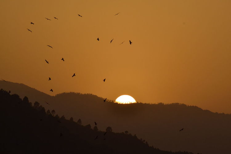 Birds fly as Sun sets at village Bassoni along LoC in Mendhar Sunset Vertebrate Bird Animal Animals In The Wild Animal Themes Animal Wildlife Silhouette Group Of Animals Sky Flying Beauty In Nature Flock Of Birds Orange Color Scenics - Nature Sun Nature No People Outdoors